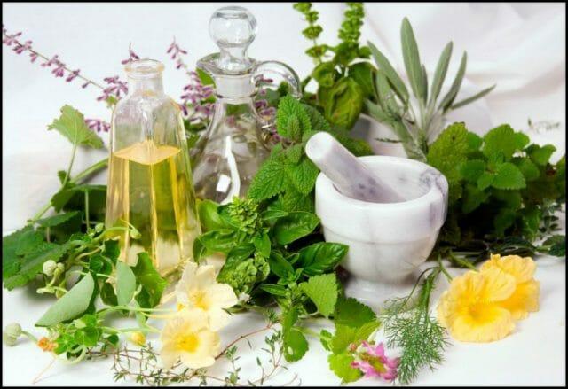 Лекарственные растения в вашей аптечке