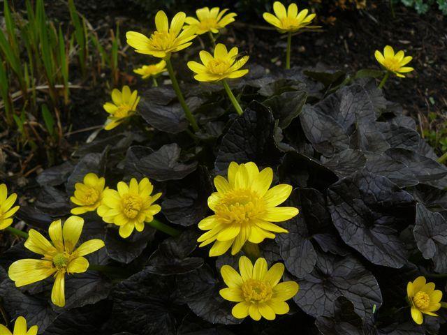 Цветки золотистые