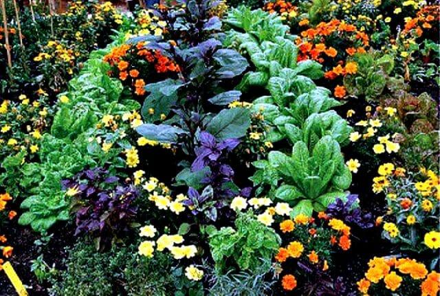 Растения-компаньоны