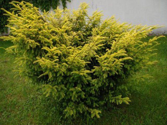 Густая зрелая листва