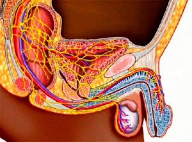 Поддержание репродуктивной способности
