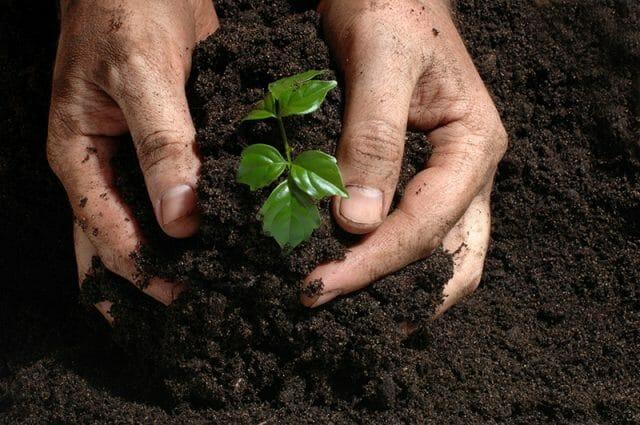 Контроль кислотности почвы
