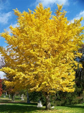 """""""Autumn Gold"""""""