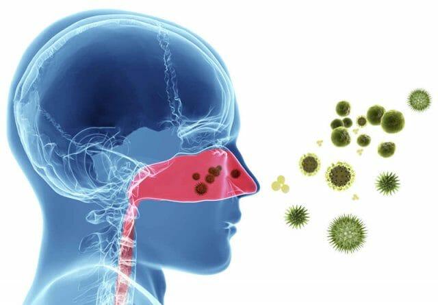 Сенная лихорадка и синусит