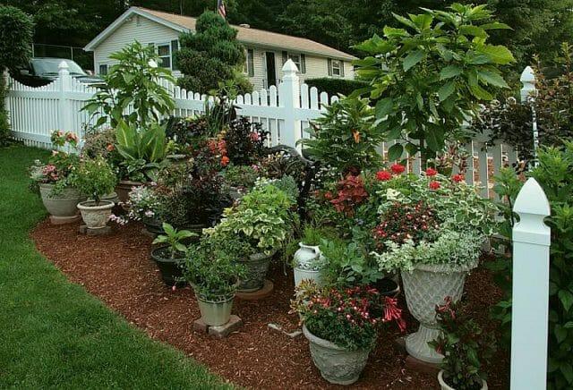 Выращивание контейнерных цветов