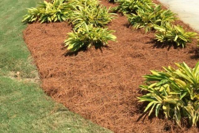 Слой мульчи подавляет распрорастание сорняков и тормозит их развитие