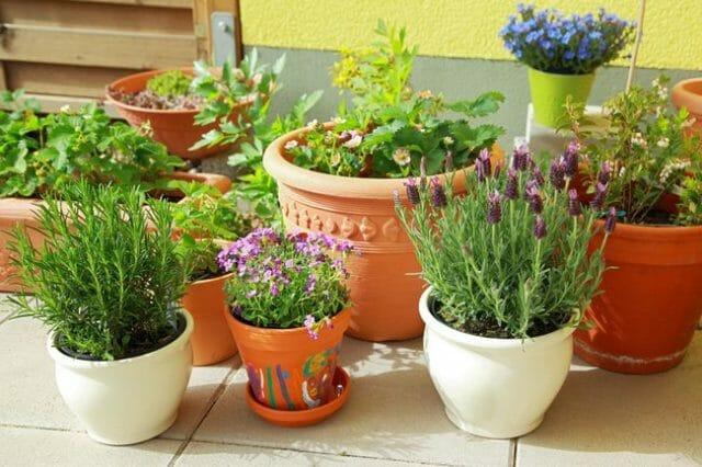 Ароматный сад на окне