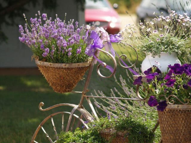 Подберите цветущие травы для оконного ящика
