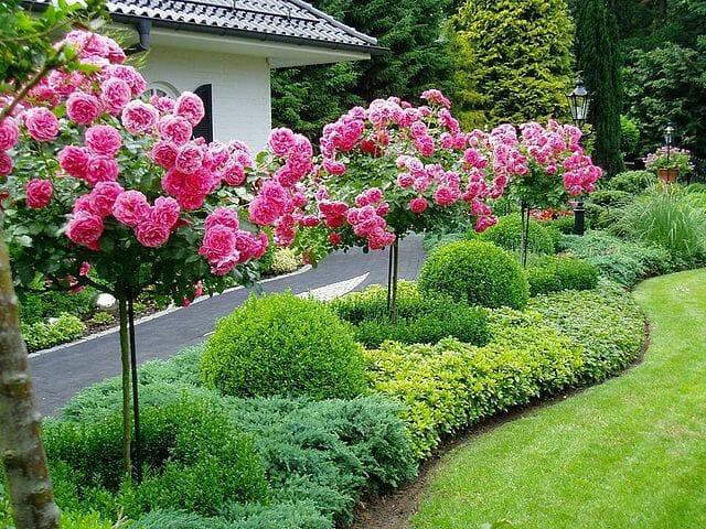Штамбовые украшения сада