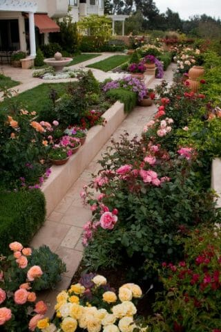 Украшение сада крупными розами