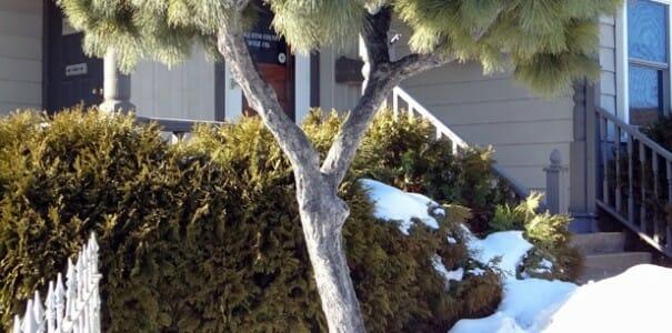 Новая жизнь старых деревьев