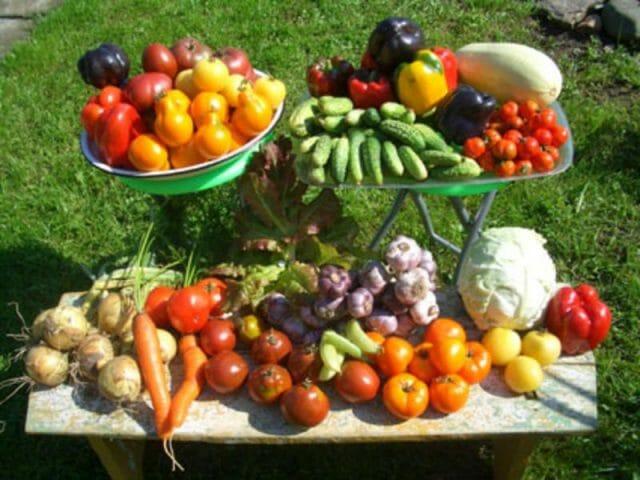 Праздник для глаз овощных культур