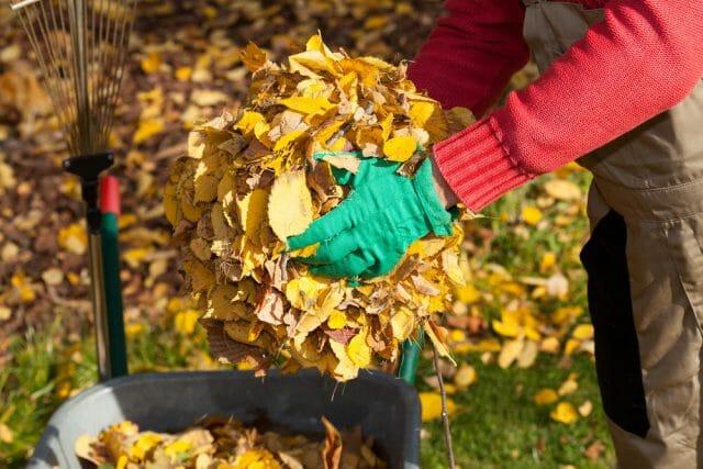 Поскольку листья большинства растений богаты таннинами и перепревают очень медленно, большие массы опавшей листвы нужно компостировать