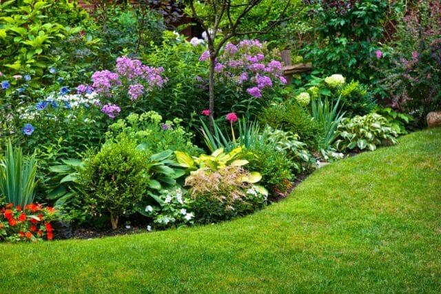 Многолетники для любого сада