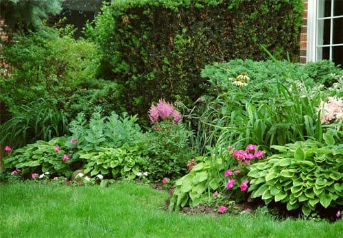 Садовые цветники в глубокой тени