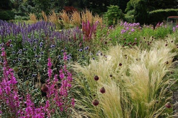 Цветение травянистых многолетников