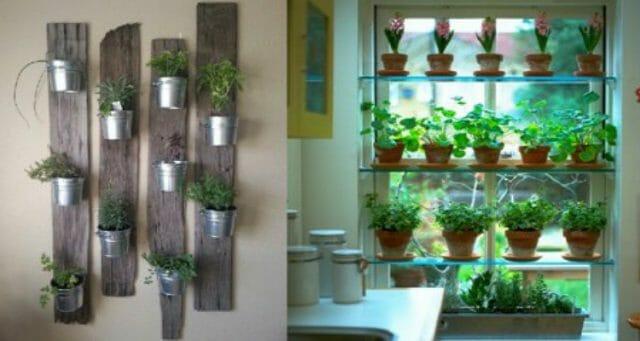 Кухонный сад пряных трав