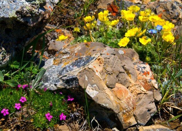 Цветник среди камней