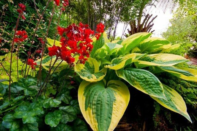 Садовые цветы, предпочитающие полутень