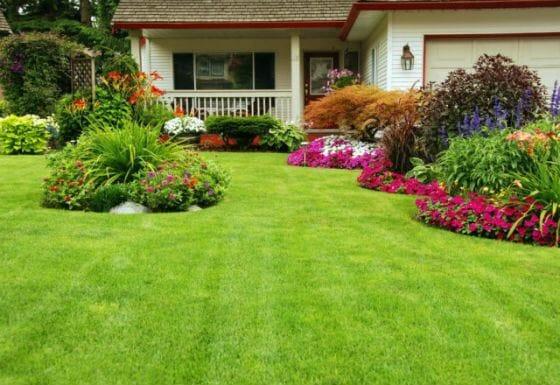 Цветущая лужайка перед домом
