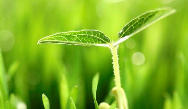Эффективность бактериальных удобрений