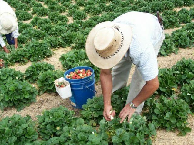 Подкормка почвы бактериальными удобрениями ликвидирует недостаток живых организмов