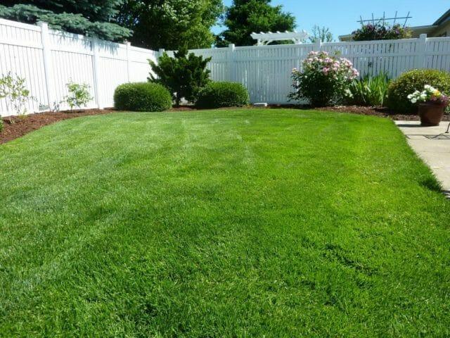 Наиболее популярным способом стрижки газонов являются срезание травы на 3 см