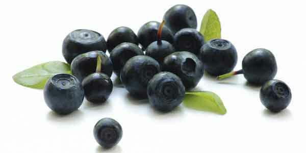 Лечебные и полезные свойства черники