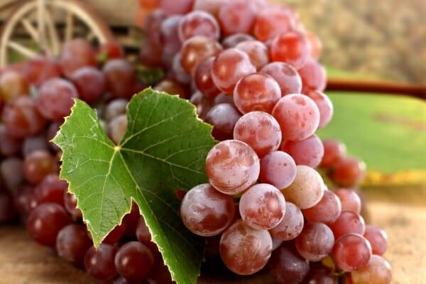 Какими полезными свойствами обладает красный виноград