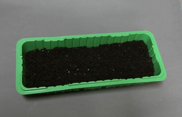 Выращивание Дельфиниума из семян в домашних условиях
