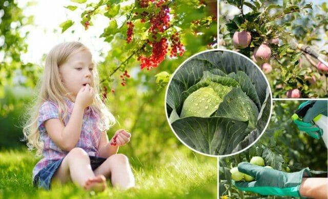Обработка растений от вредителей перед сбором урожая