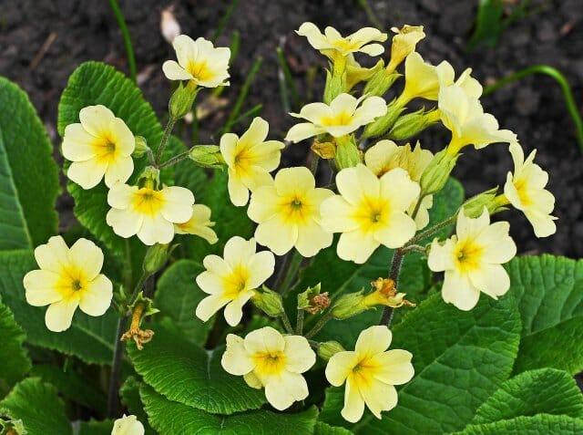 Малыши-крепыши: 15 лучших низкорослых растений для альпийской горки и рокария
