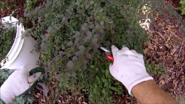Какие растения нужно обрезать после цветения