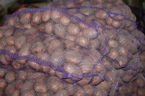Картофель Вектор: описание сорта, урожайность, отзывы