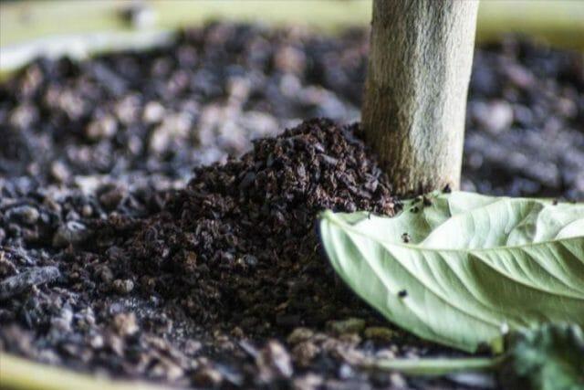 Используем кофе как удобрение для огорода