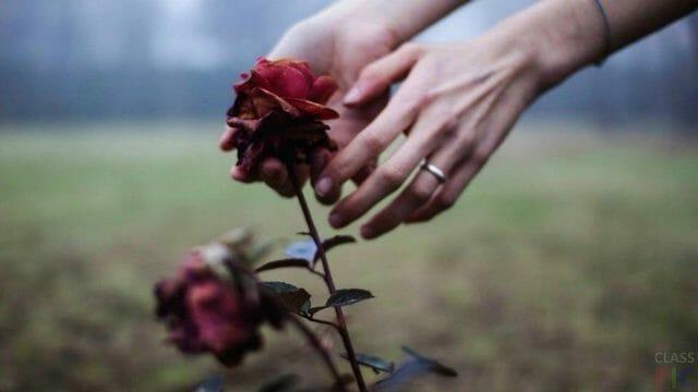 Основные причины гибели молодых роз