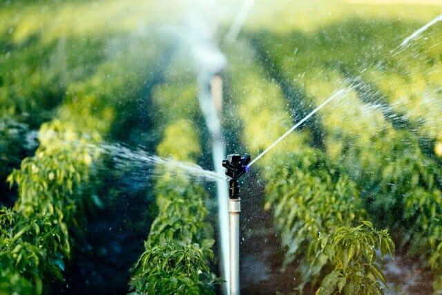 Как и когда правильно поливать растения в огороде – советы для увеличения урожая