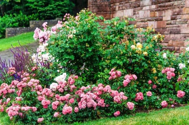 Как создать стильный цветник из роз – подбор сортов, правила ухода