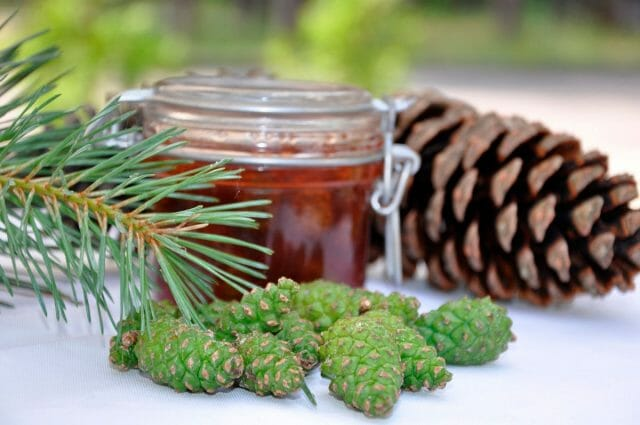 Сосновые шишки: рецепты для лечения и укрепления здоровья