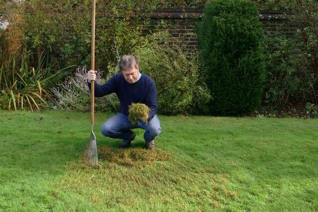 Скарификатор для газона: что это такое?