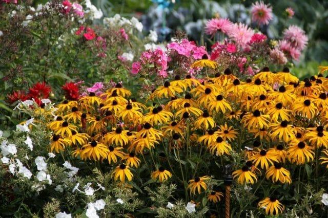 Сезонные работы в саду и огороде в августе