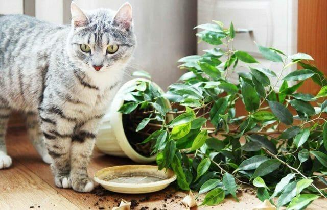 Как уберечь комнатные растения от кошки