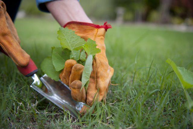 Способы борьбы с сорняками на участке