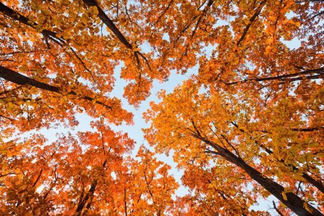 Каким будет ноябрь 2018 года – долгосрочный прогноз погоды на весь месяц