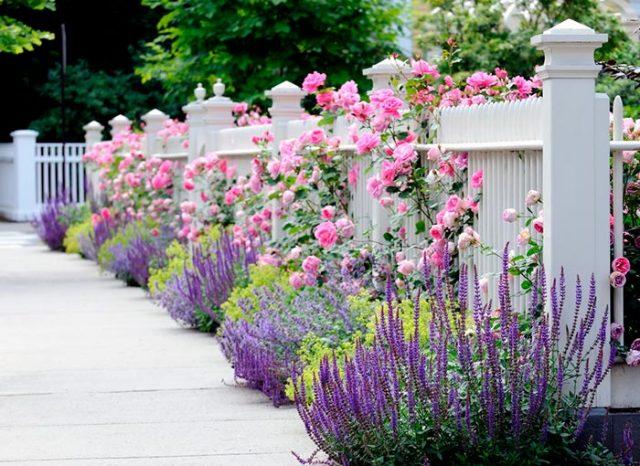 Розы в ландшафтном дизайне сада: фото, оформление дачного участка плетистыми и другими розами