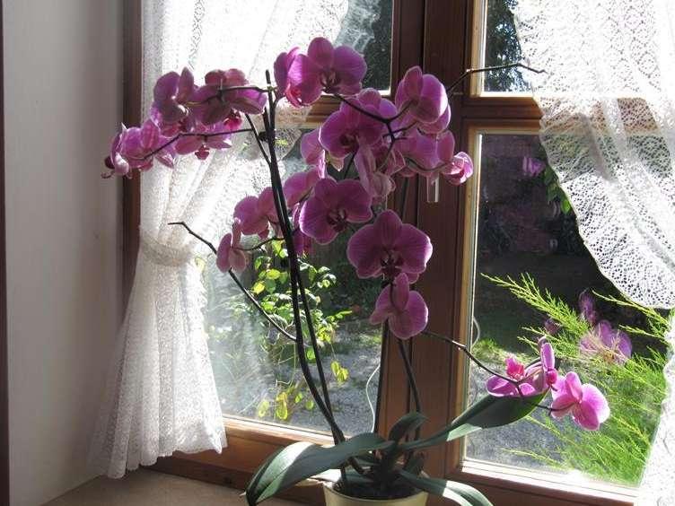 5 лучших комнатных растений для новичка-цветовода