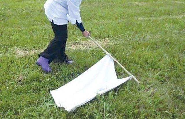 Как защитить участок от клещей: бесплатный народный метод