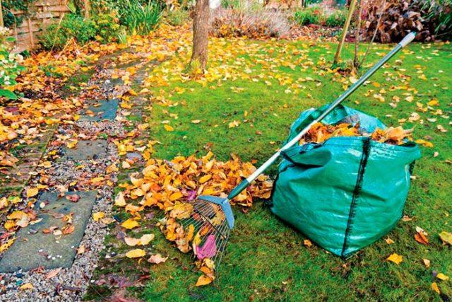 Как правильно подготовить участок с газоном к зиме