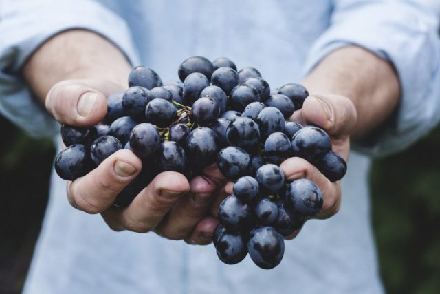 Секреты осеннего ухода за виноградом