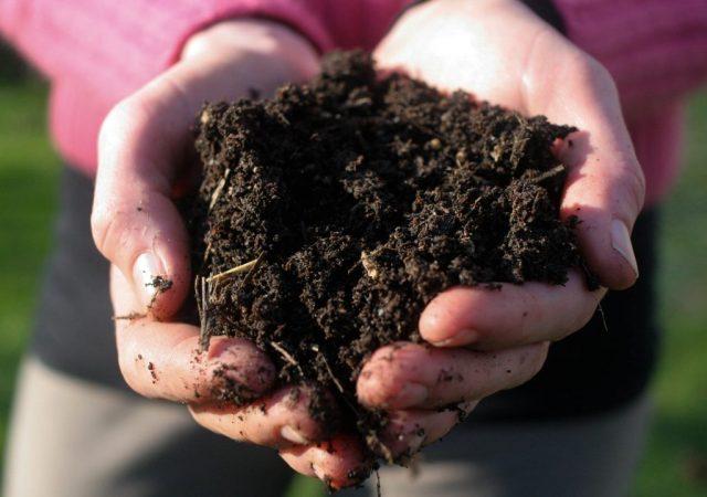 9 вещей для выращивания рассады, которые нужно заготовить уже с осени